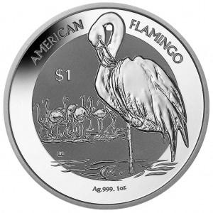 American Flamingo 2021 - rewers